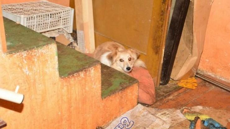 Fetor i martwe zwierzęta w mieszkaniu. Kobiecie odebrano 19 żywych psów i ponad 60 kotów
