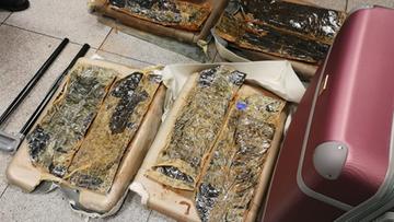 Heroina za 4,5 mln zł na warszawskim lotnisku. Przemytnika wytropiły psy
