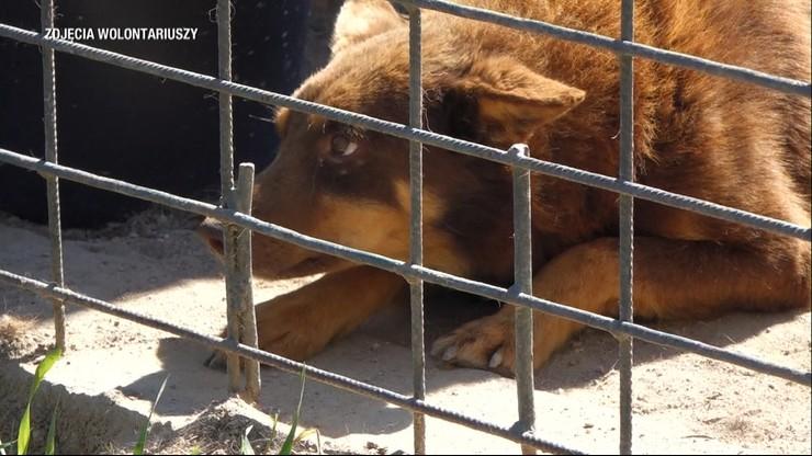 """""""Mordownia dla zwierząt"""" w Radysach. Wciąż 1,5 tysiąca psów czeka na adopcję"""